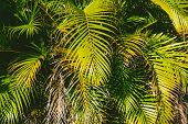Close-up Of Beautiful Subtropical Palm Trees Shot In Queensland, Australia In Summer poster