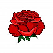 Beautiful Bright Red Rose Isolated On White Background. Tattoo Artwork. Nature And Botany Theme. Gra poster