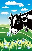 foto of moo-cow  - Kind cow on a meadow - JPG