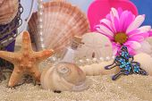 foto of sanddollar  - Starfish With Sea Shells and Flower on Beach - JPG
