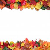 colorful autumn leaves with white background