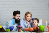 Gardening. Mom, Dad And Son Planting Flower At Home. Family To Plant Flowers In Pot. Child With Pare poster