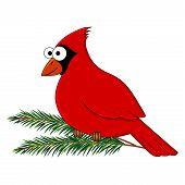 Funny Cartoon Cardinal Bird. Vector Bird  Illustration. Cartoon Bird. Isolated On White Background. poster
