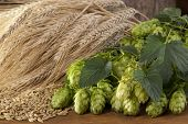stock photo of malt  - still life with barley malt and hop cones - JPG