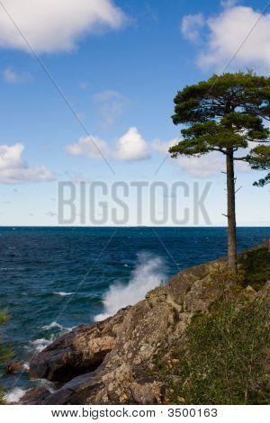 Tree On Rocky Island Cliff