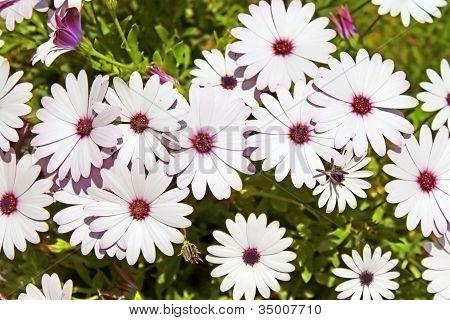 Flores en un jardín bastante blancas