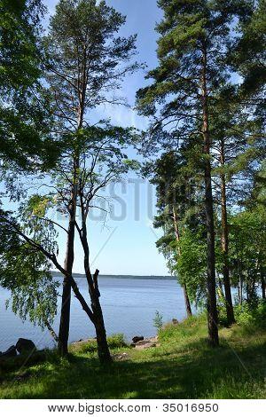 Small wood and lake