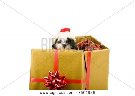 Santa Puppy Christmas Gift