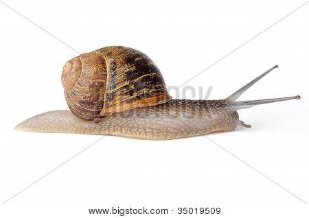 Caracol de Escargot