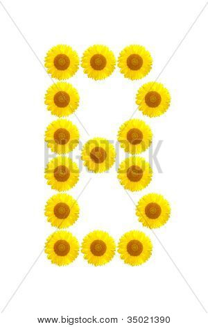 Sunflower Alphabet B On The White Background