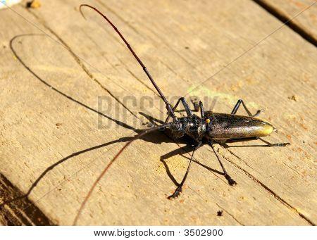 The Bug.