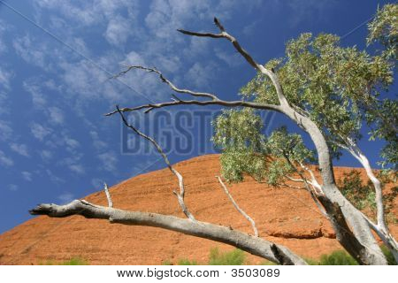 Tree At Kata Tjuta