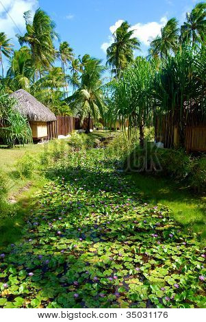 Garden on Bora Bora