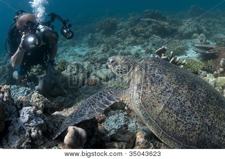 Diver Photographing Green Turtle Closeup