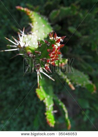 Dangerous cactus