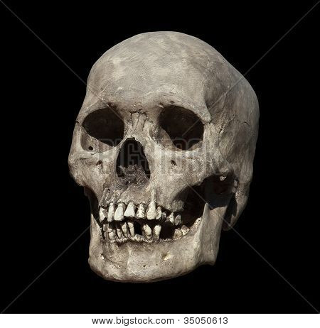 Old Weathered Human Skull