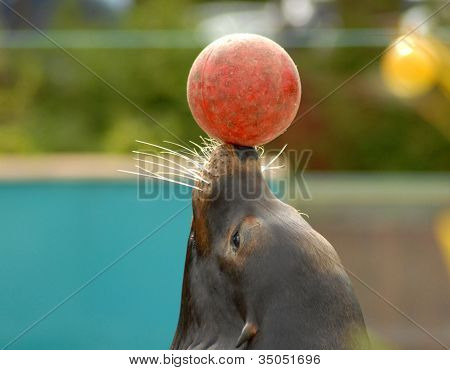 Seal and Ball