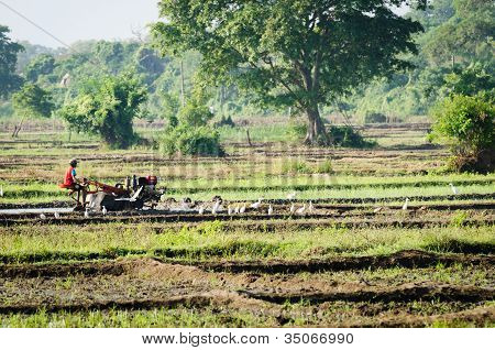 A Boy Working With A Motor Plow In A Rice Field