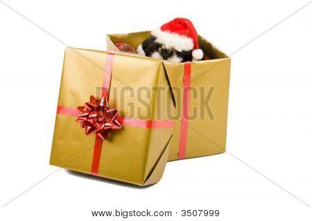 Santa Welpe Weihnachtsgeschenk