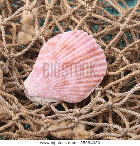 Sea shells with net