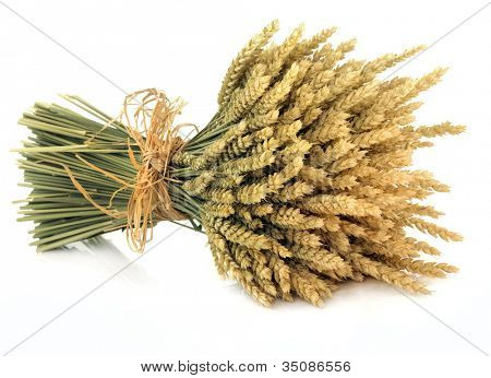 Wheat bundle tied with raffia over white background.