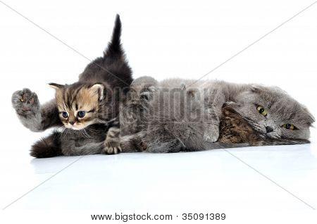 Cats Family Milk Feeding