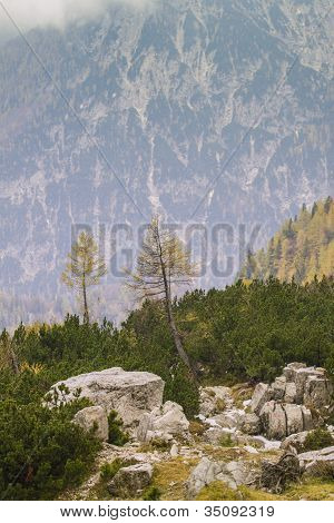 Single Tree And Julian Alps