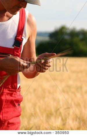 Farmer Inspecting