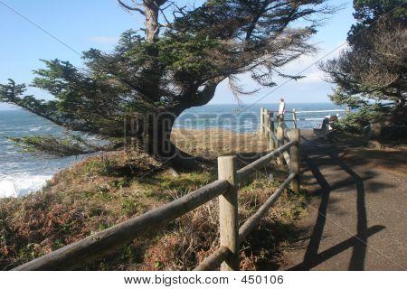 Shore Acres Coastal Overlook