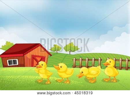 llustration of the four chicks in the farm with a barn and a wooden fence