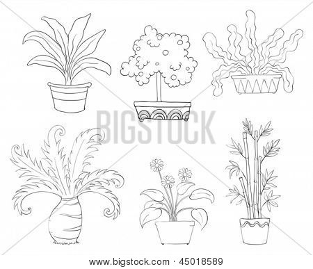 Illustration of the six different kinds of plants on a white background