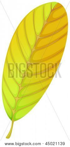 Illustration of an elliptic leaf on a white background