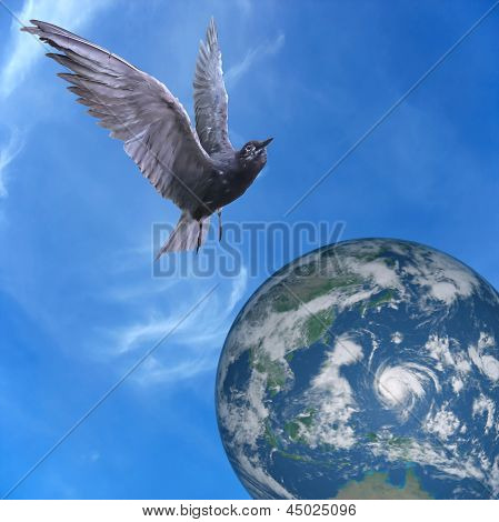 Pigeon Dove Flying Over Earth, Blue Sky And Clouds