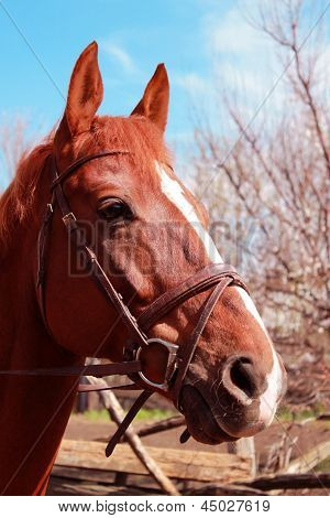 Red horse in the shelter against the wood