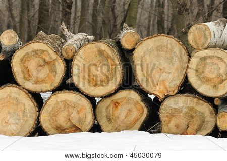firewood in the forest. sawn wood.