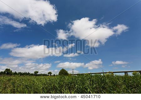 grassfield with blue sky
