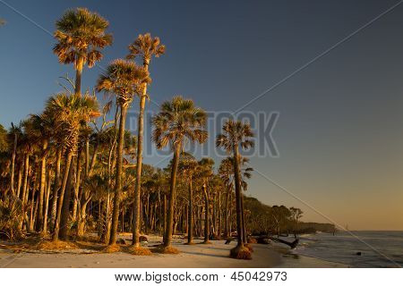 Beach in South Carolina