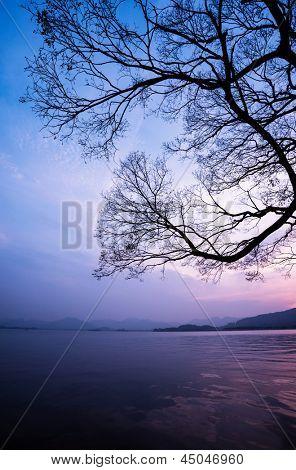 Baum-Sonnenuntergang
