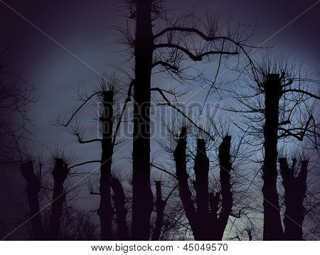 Spooky Bare Trees