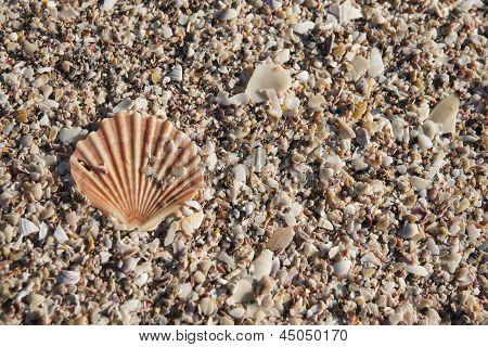 Fan shell.
