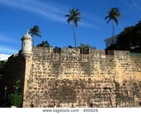 Wall And Three Palms