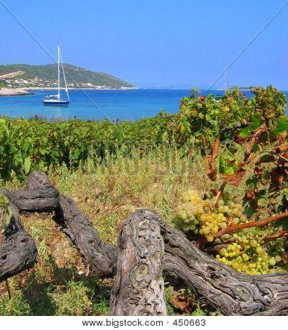Island Vineyard