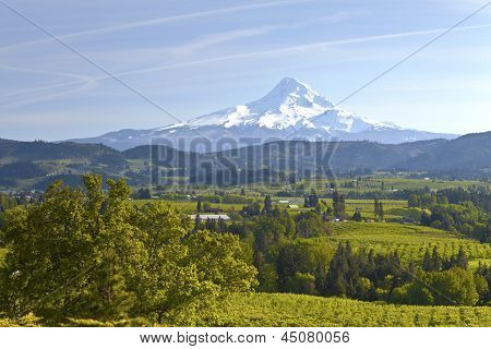 Mt. Hood And Hood River Valley.