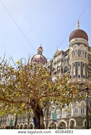 The Protected Pigeon Tree At The Taj