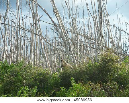 Dead Trees Underbrush