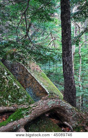 Glacier Rock with Tree