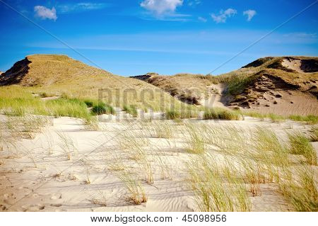 Dry Grass And Sandy Dunes