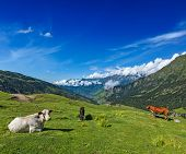 stock photo of himachal pradesh  - Serene peaceful landscape background  - JPG