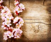 picture of tree-flower  - Spring Blossom over wood background - JPG