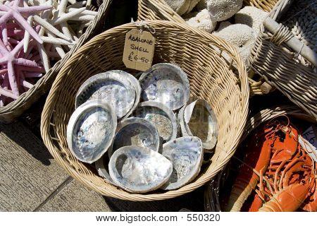 Muscheln von der Seeseite vertrieben